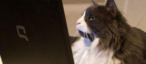 chat-ordinateur-clavier_783621