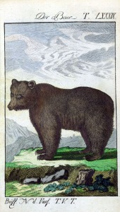 bear-engraving-color11