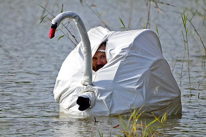 photographe-fou-cygne